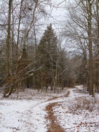 Snowy trail through Rutgers Preserve