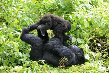 (Reuters) Prevailing theories for monogamy state males chose one mate to ensure the well being of their offspring.