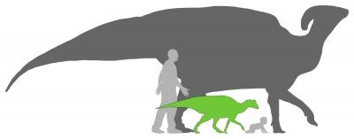 Size comparison of a full grown duck-billed, a baby, and a human.