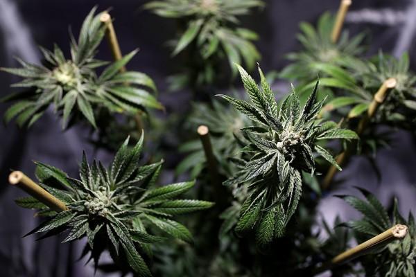 Illinois Medical Marijuana Sales Reach $2.57 Million in June