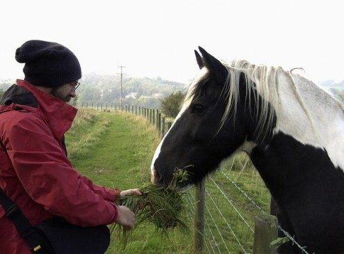 Horses Reduce Stress Levels in Youth: Study