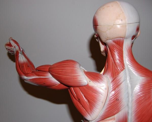 Sudden Decline in Testosterone May Cause Parkinson's Disease Symptoms in Men