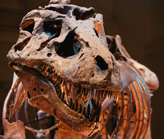 Ancient dinosaur teeth reveals long incubation period for eggs