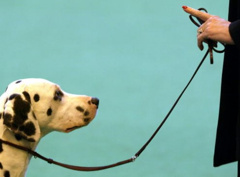 Study Shows Dogs Use Deception To Get Treats