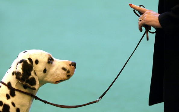 Basic dog obedience courses are now being offered at the Metropolitan Community College in Fremont