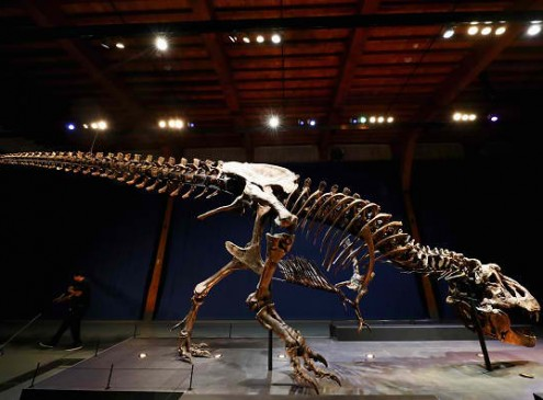 Climate Change Did Not Cause The Extinction Of The Australian Megafauna