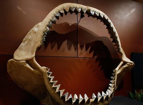 International University Researchers Discover Earliest Human Ancestor