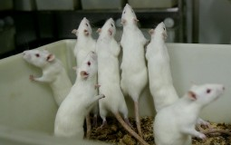 University of Montana urged to stop testing on animals
