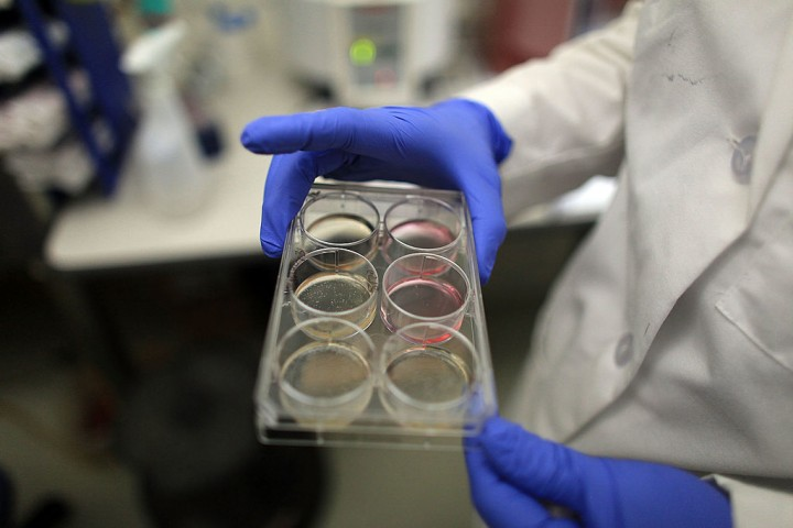 Scientists Continue Stem Cell Research