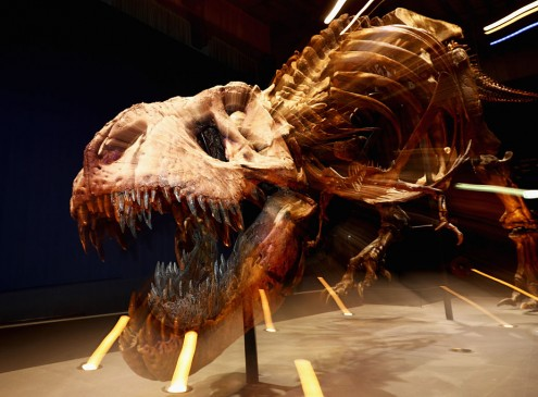 Ohio State University Crowdfunding Needs Help In Purchasing Dinosaur Bones