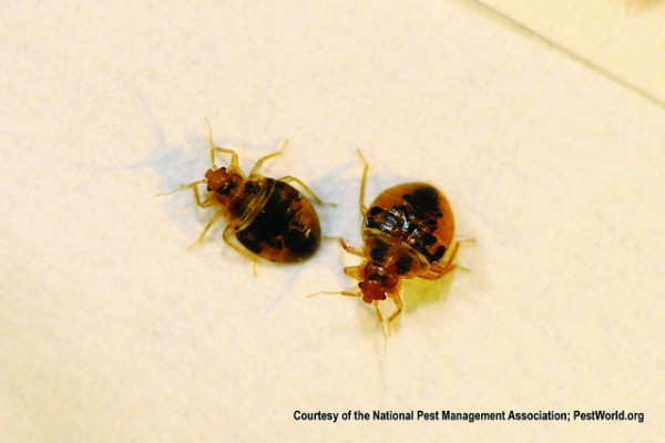 Humans require 80 hours of freezing temperature to kill a bed bug.