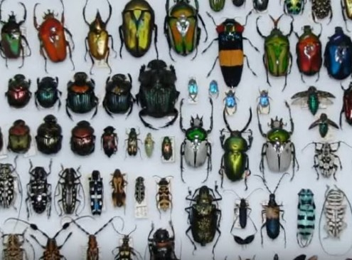 Arizona State University Receives Over 1.2 Million Insects For Research