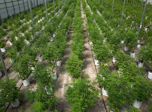 Medical Marijuana Funds College Scholarships In Colorado