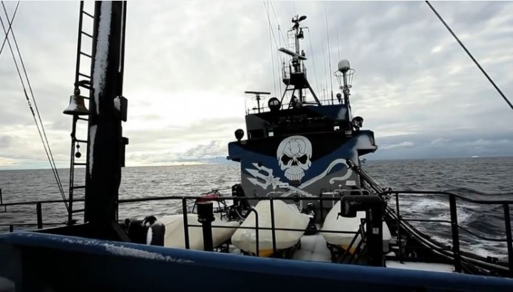 The Sea Shepherd