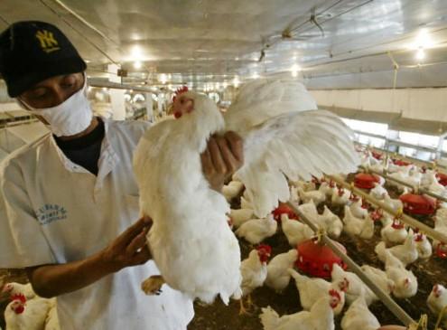 Anti Bird Flu Measures Decreased in the UK; America May Follow Suit [Video]
