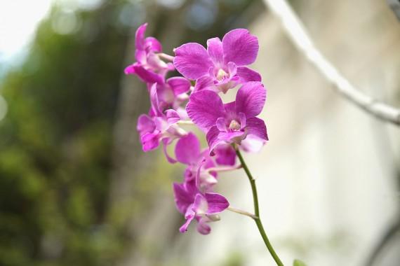 Smart Flower