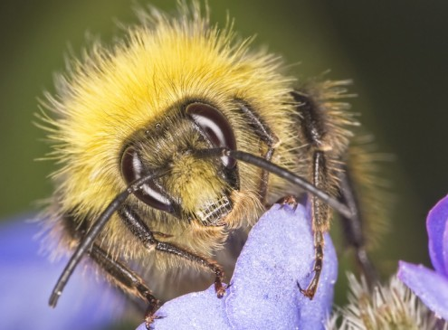 """Researchers Develop """"Bee-Friendly"""" Pesticide from Spider Venom and Plant Protein"""