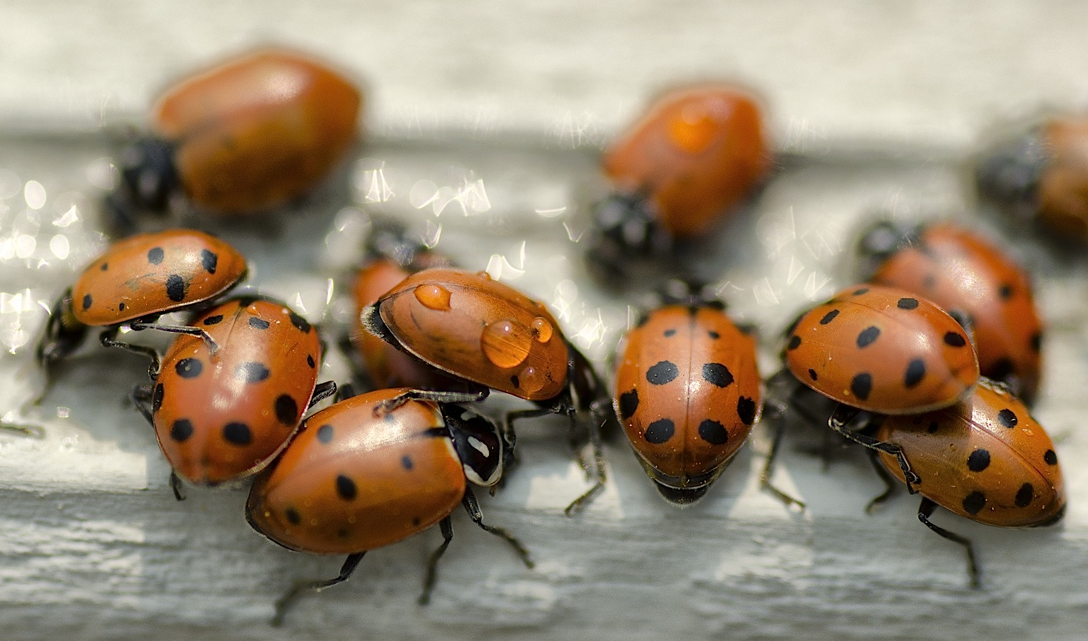 Millions Of Ladybugs Swarming The South, Leaving Behind ...